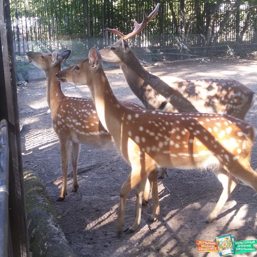 мини зоопарк казань:
